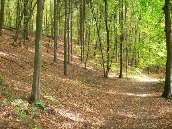 Eine waldreiche Umgebung der Stadt Freienwalde  bietet erlebnisreiche, gute Erholungsmöglichkeiten.  Foto:H.Domnick