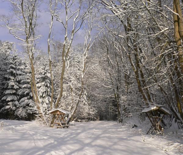 Auch im Winter bietet der Wald um Bad Freienwalde Gelegenheit zu reizvollen Spaziergängen.  Foto: H. Domnick