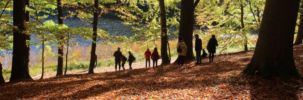 Herbst im Grumsiner Forst